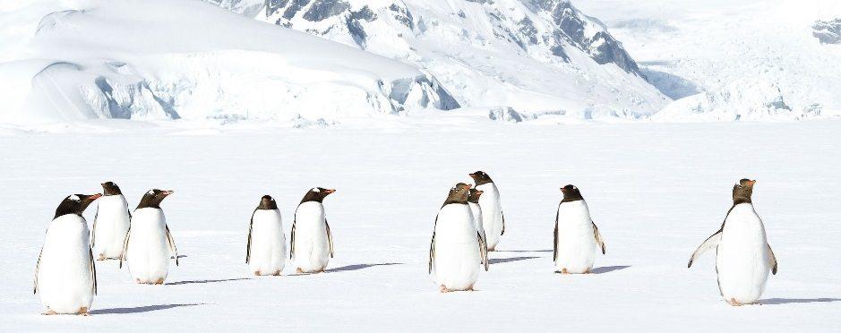 ponant-antartica2